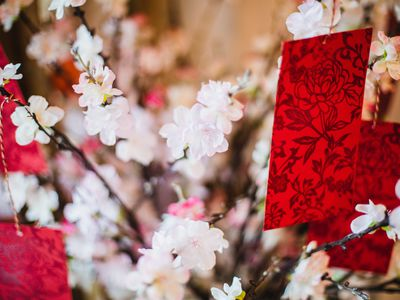 Chinese new year celebration-red envelope hanging on cherry blossom tree