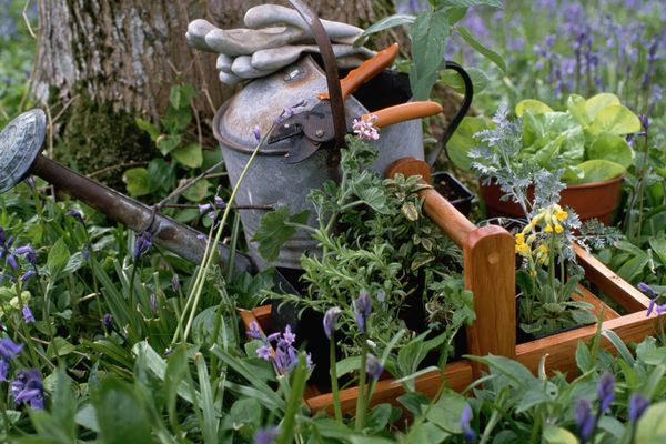 Watering Can in an Herb Garden