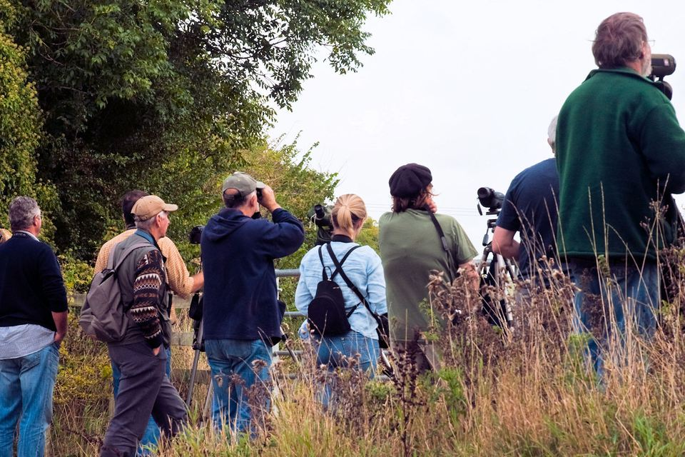 Birders in the Field