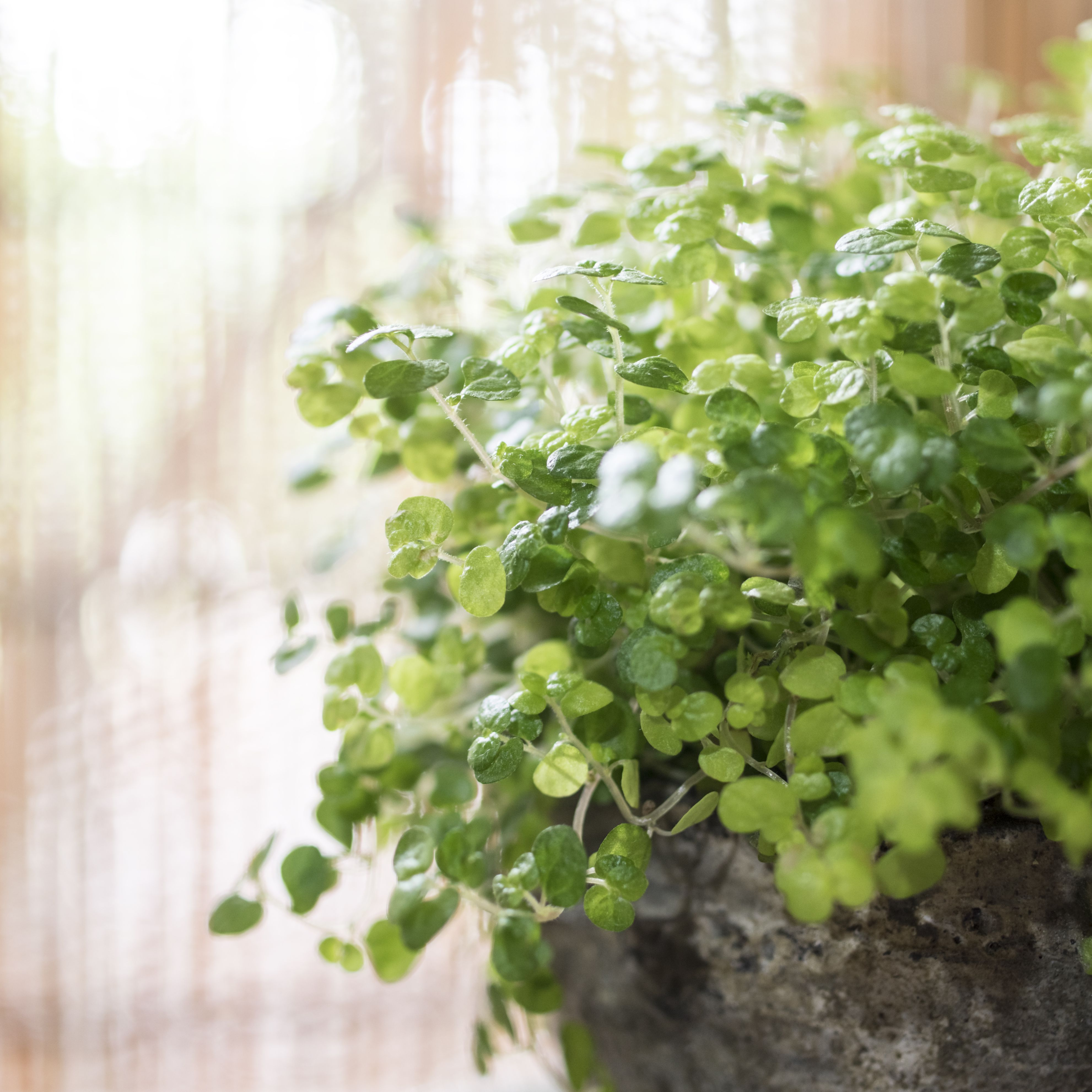 Indoor Plants That Like Direct Sunlight Nz - lo-fitoons