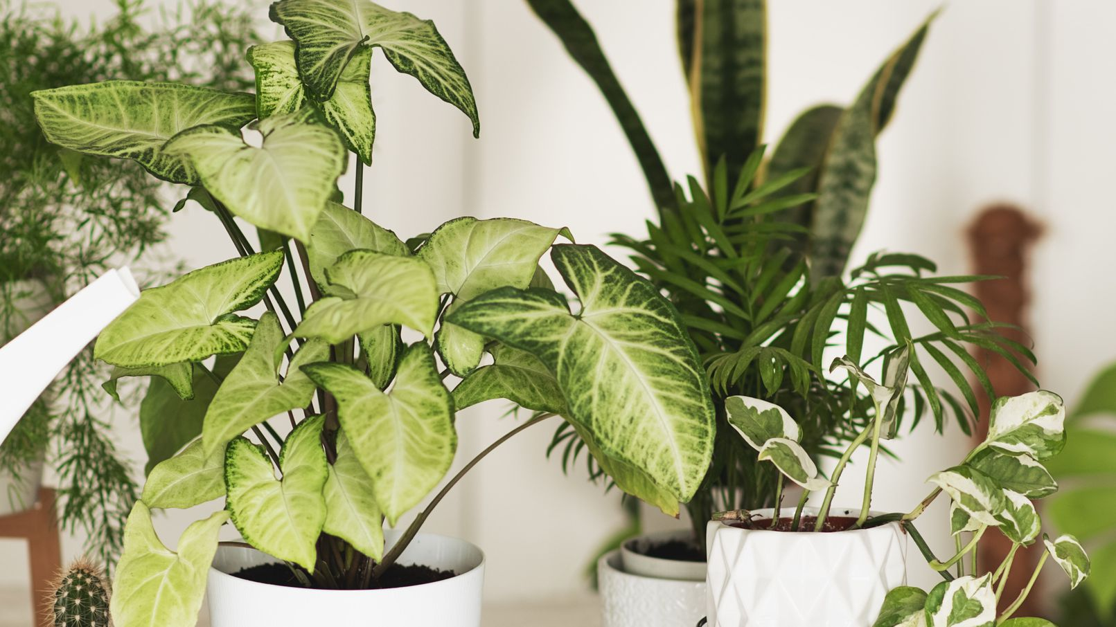5 Rare Plants That Are Totally Worth The Splurge