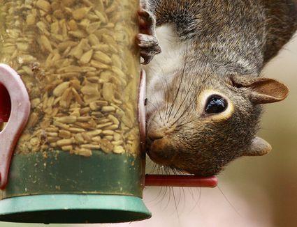 4 Good Ways To Get Rid Of Chipmunks