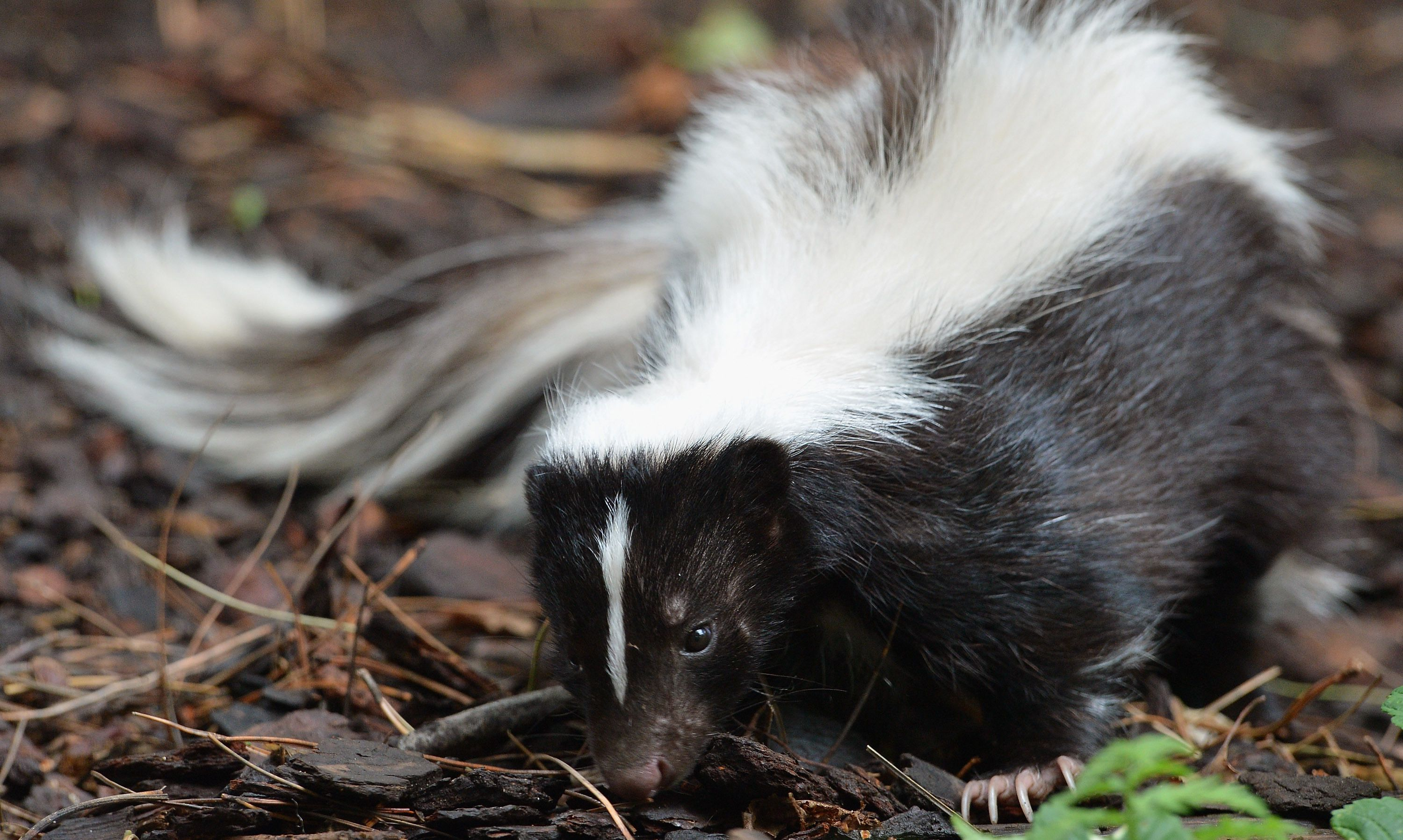 Remove Skunk Smell From Clothes And Camping Equipment