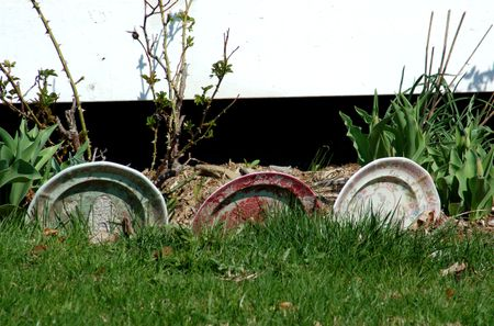 Image Dishes Used As Edging
