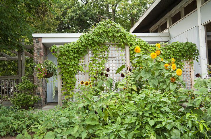 How To Build A Garden Trellis, 8 Foot Garden Trellis