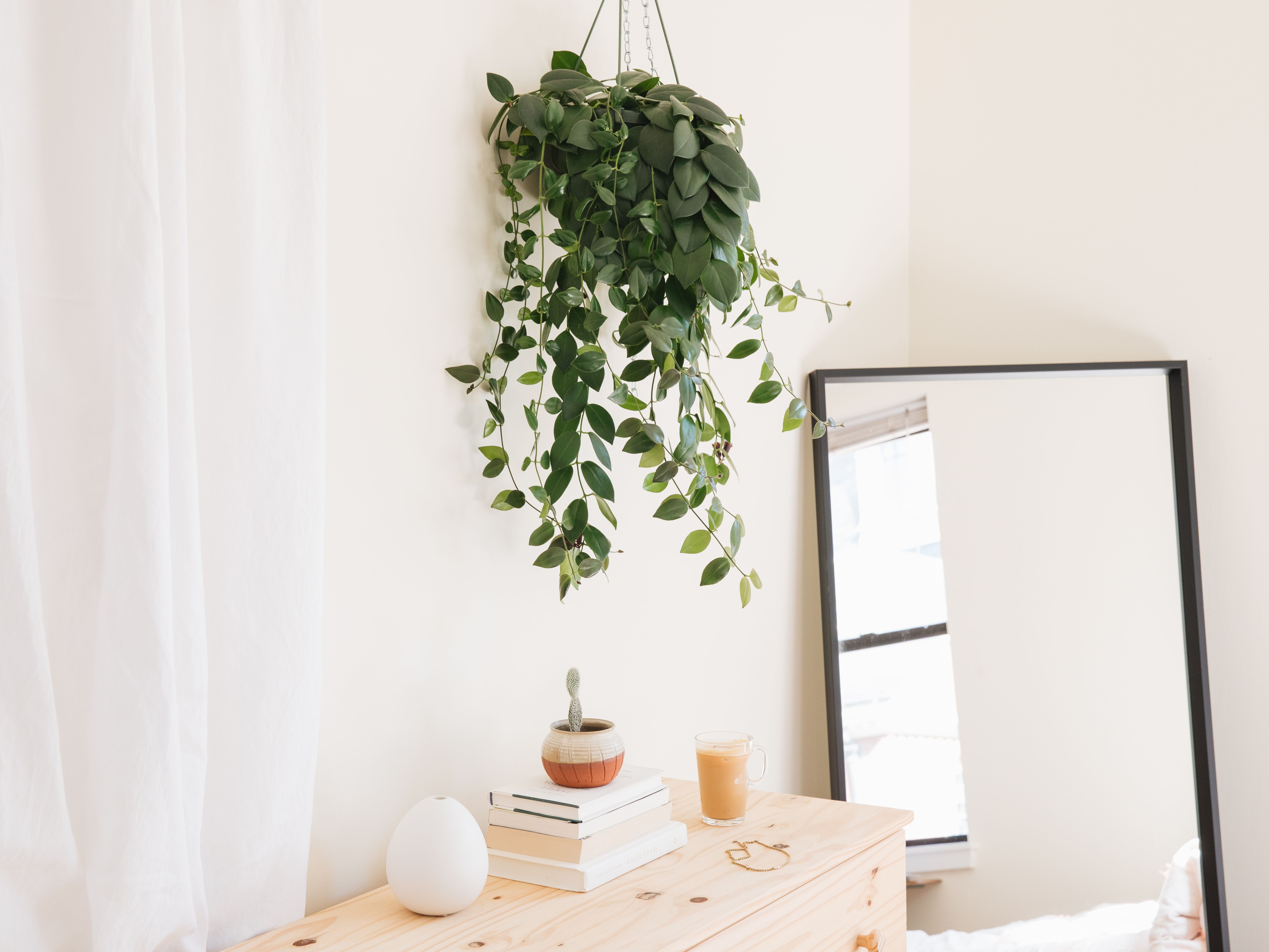 8 Best Houseplants For Hanging Baskets