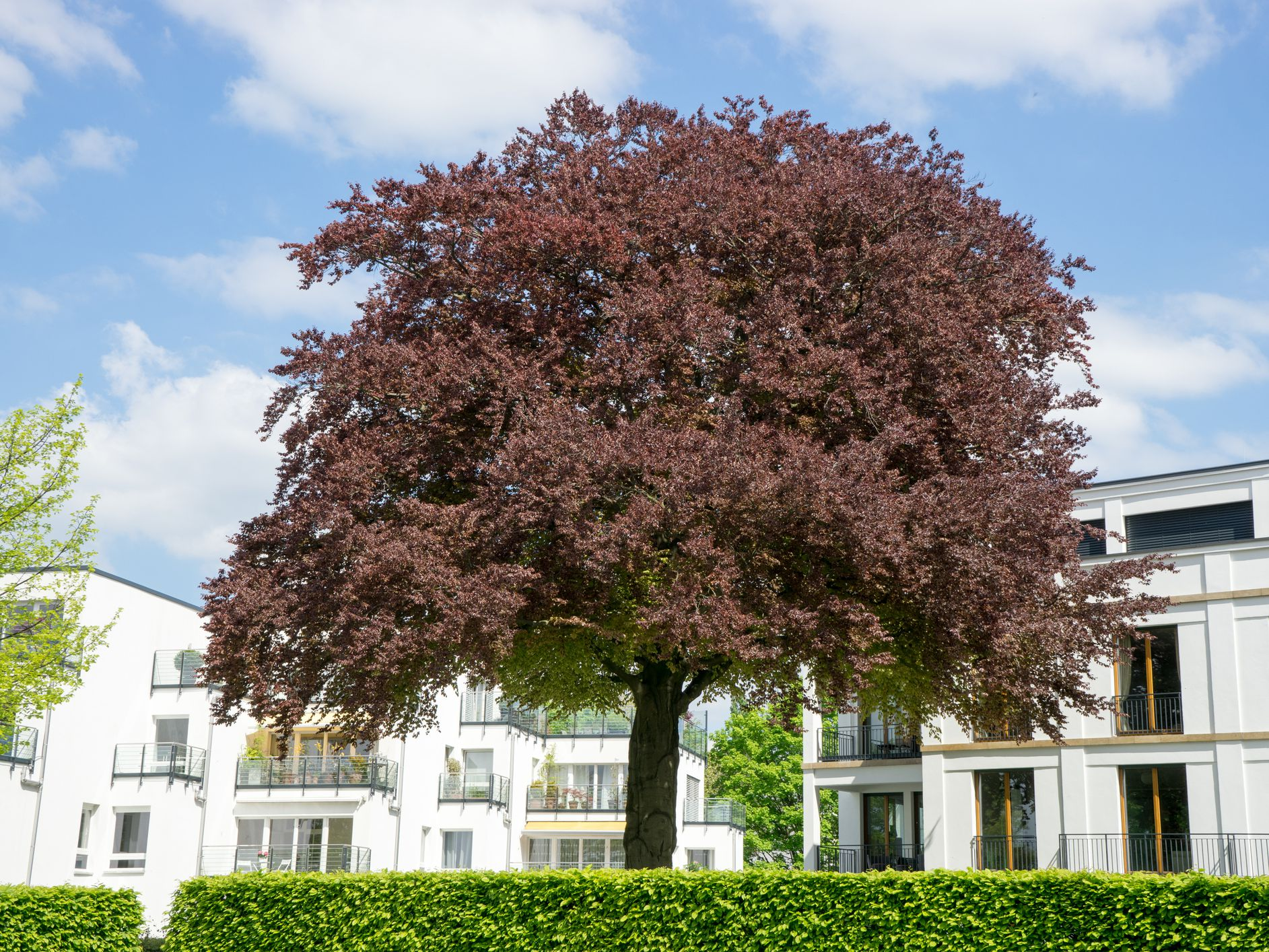 Popular Front Yard Landscape Trees
