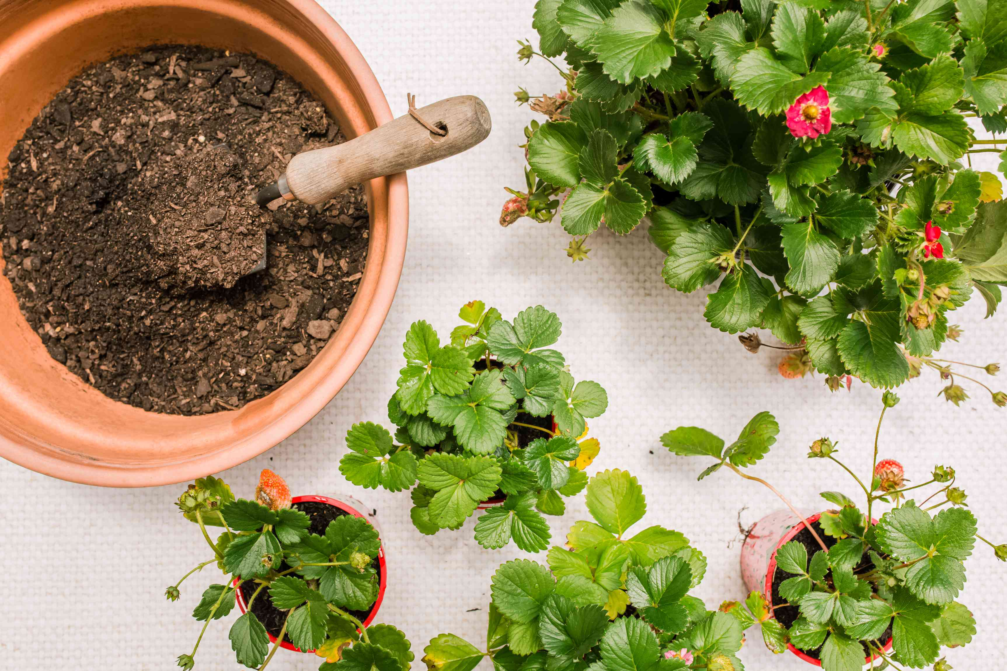preparing your container with soil