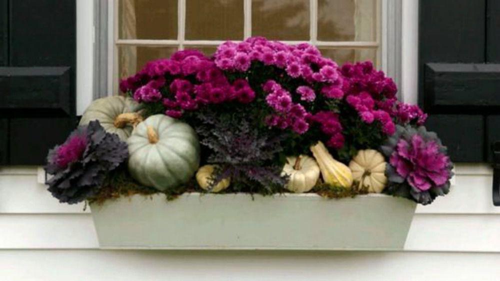 caja de ventana de caída con púrpura