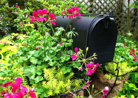 13 Ideas for an Eye-Catching Mailbox Garden