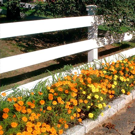 This fence is certainly dressed up by the planting done in front of it.