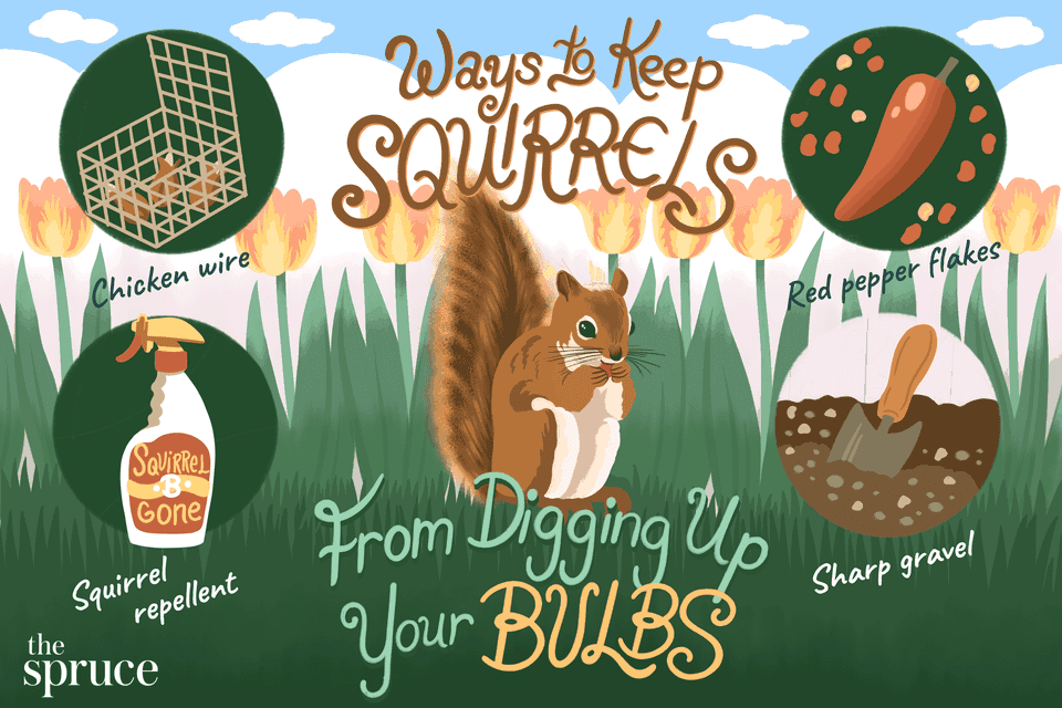 Ways to Keep Squirrels From Digging Up Your Bulbs