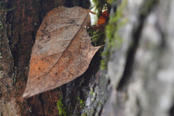 brown spotted leaf on tree trunk