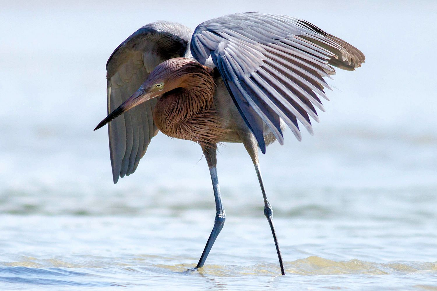 30 Best Birds To Watch For In Florida