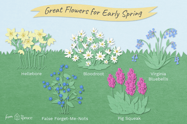 Illustration of early spring flowers
