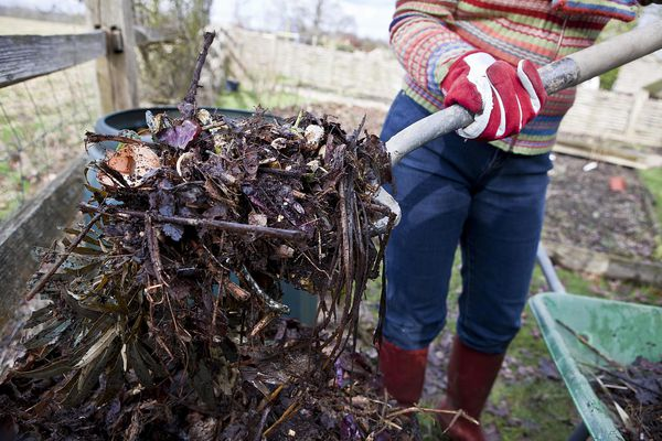 Trench composting with a pitchfork full of garden and food waste.