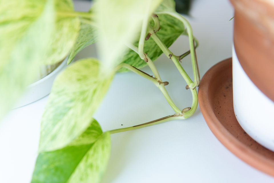 taking cuttings from plants