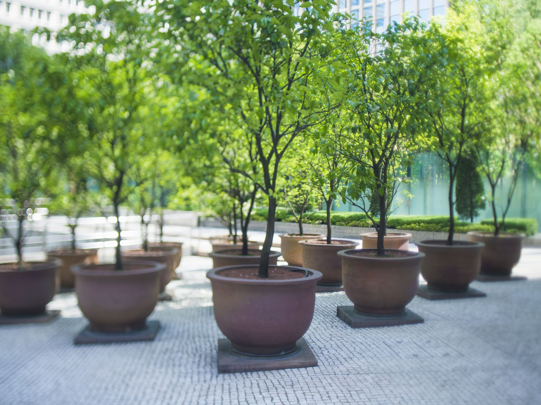 Basics Of Growing Trees And Shrubs In Pots