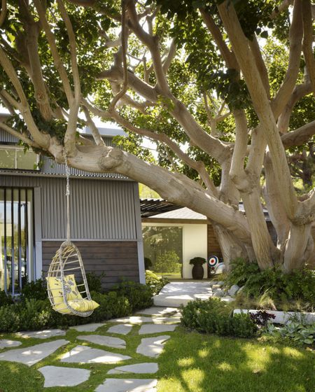 Tree With Hanging Chair In Yard