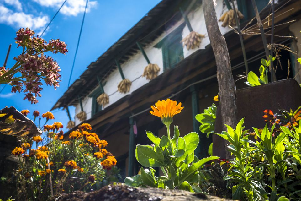 Flowering plants growing against residential building in village