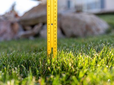 Ruler marking the grass height