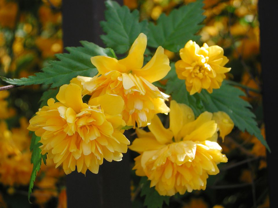 11 Types Of Shrubs That Flower In Early Spring