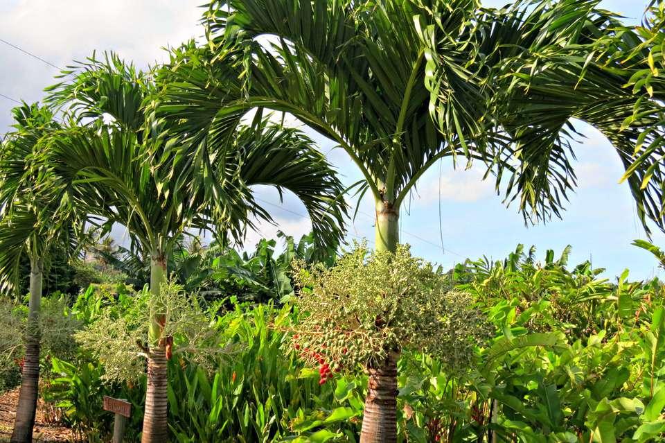 christmas palms