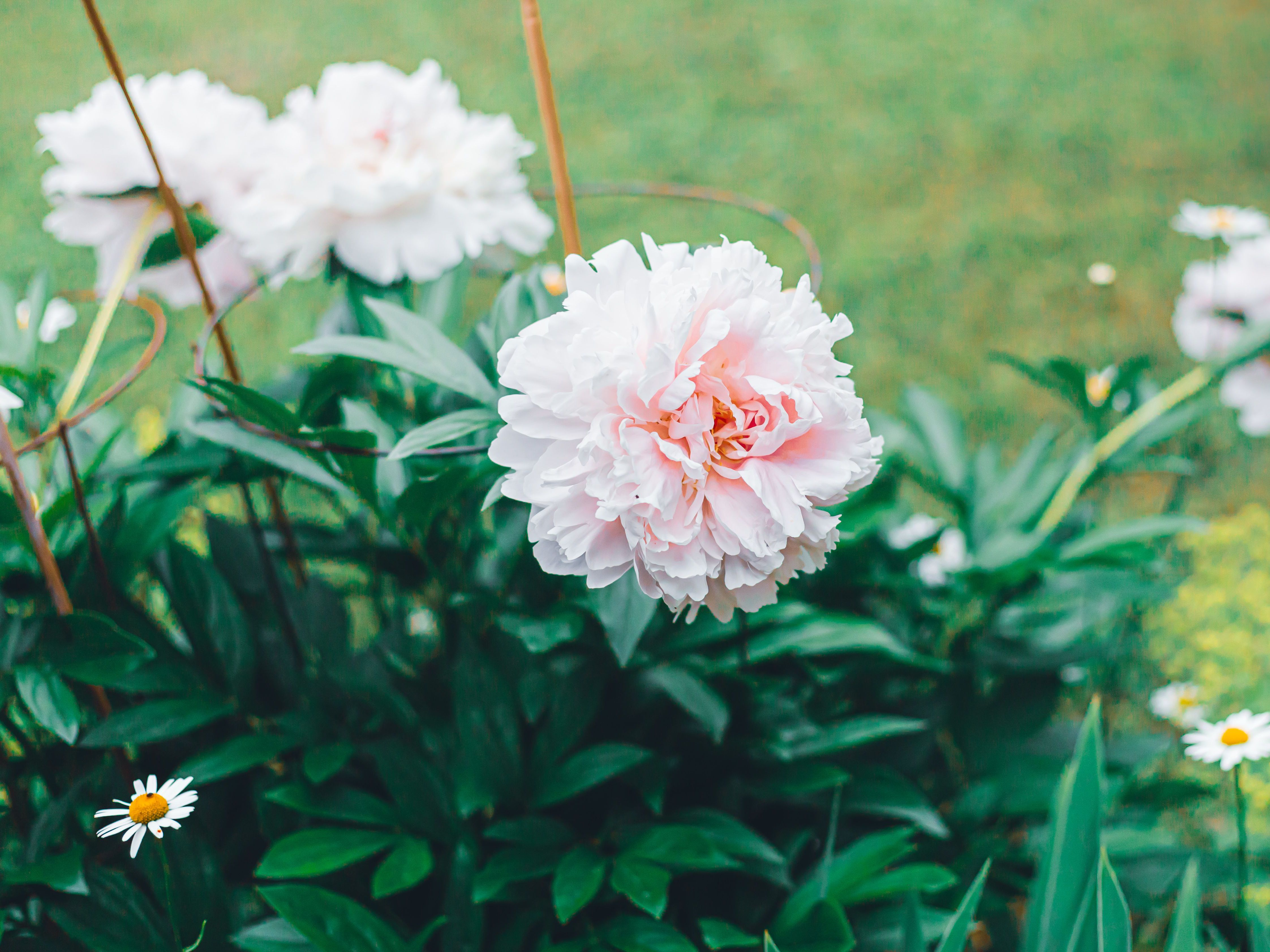 34 Perennials To Cut Back In The Fall