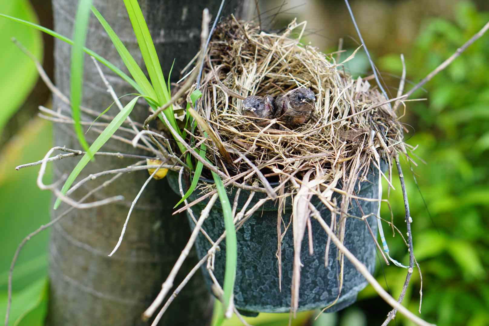 encouraging birds to nest in a safer space