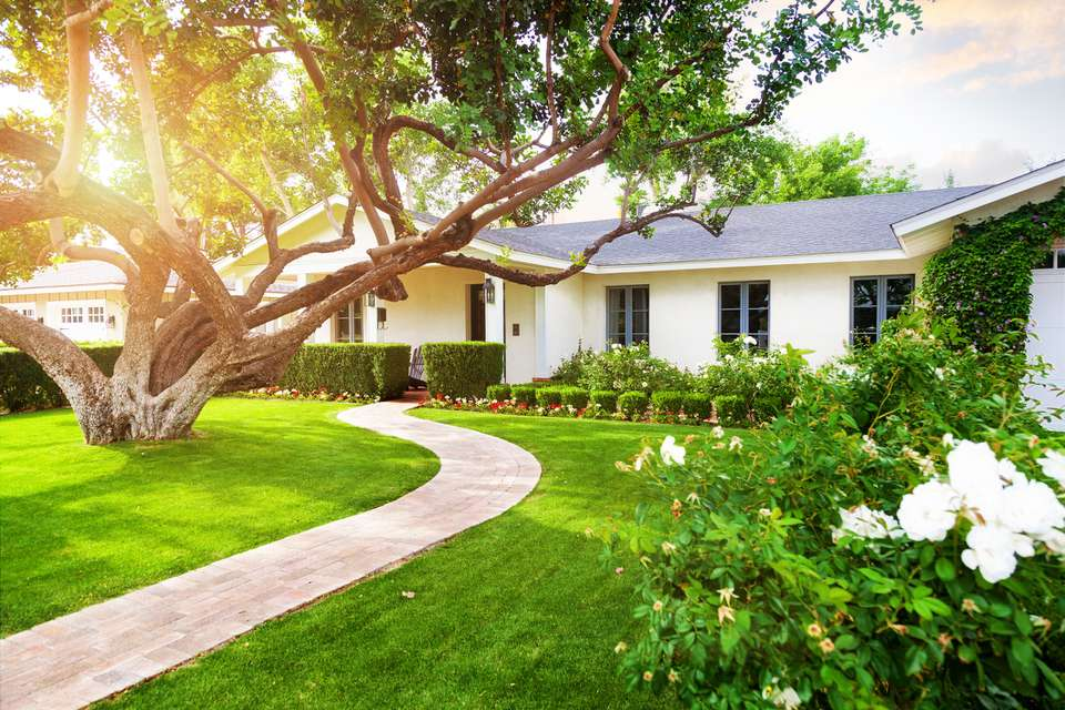 A white ranch style home with green grass, a large low-hanging tree, and flowering shrubs.