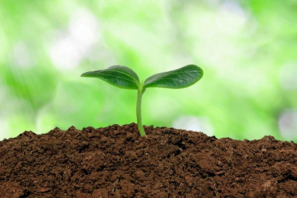 Plant sprouting from soil closeup
