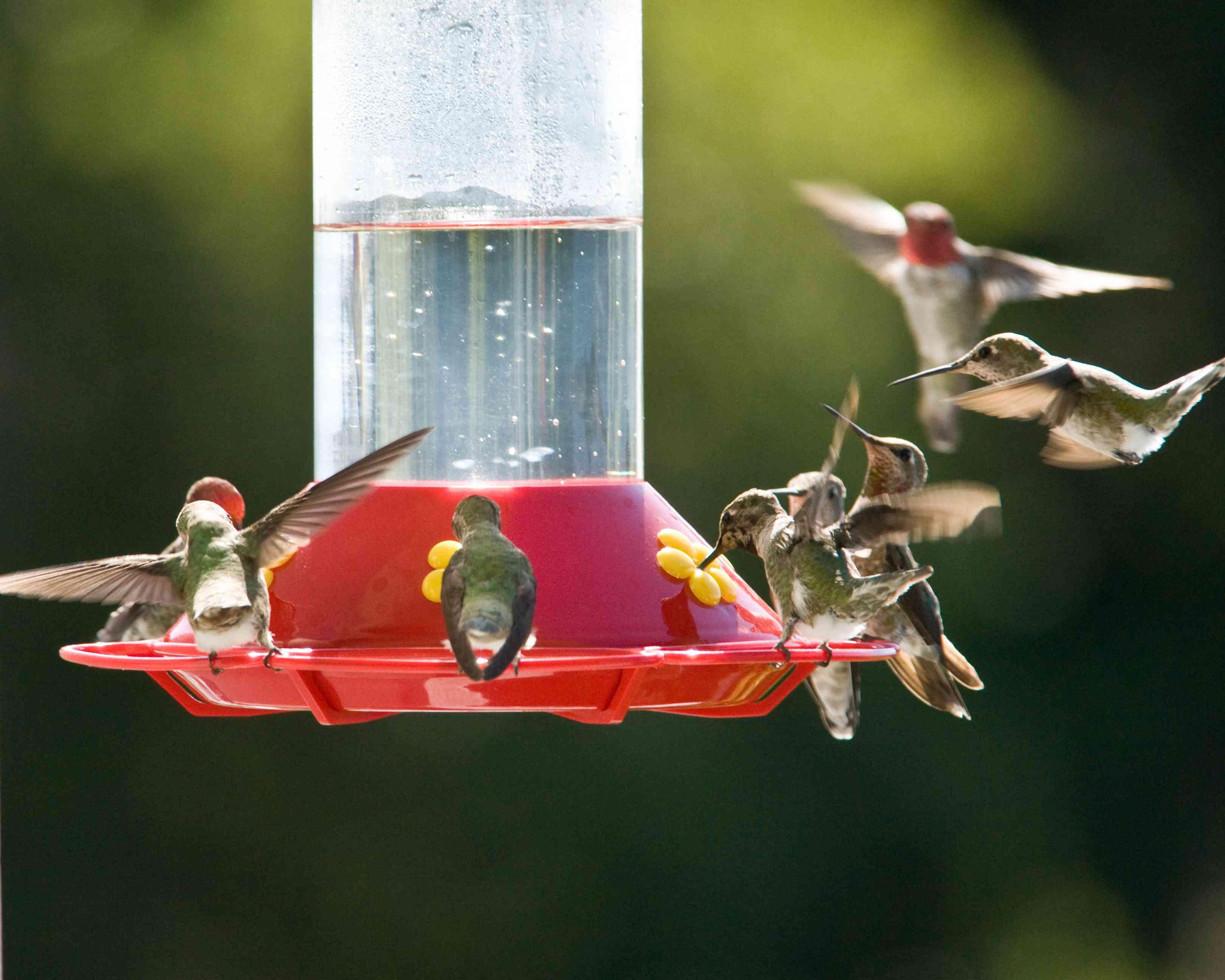 Several hummingbirds at a red feeder.