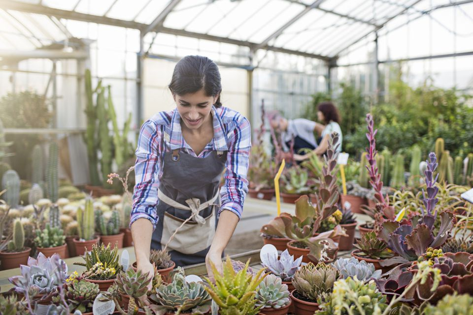 Mid adult woman examining succulents in greenhouse
