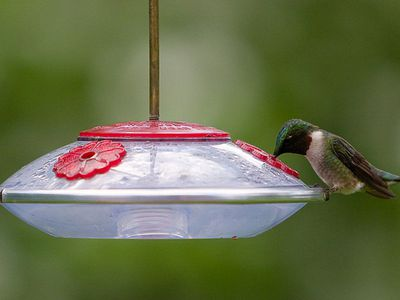 Get The Drip Out And Stop Hummingbird Feeder Leaks