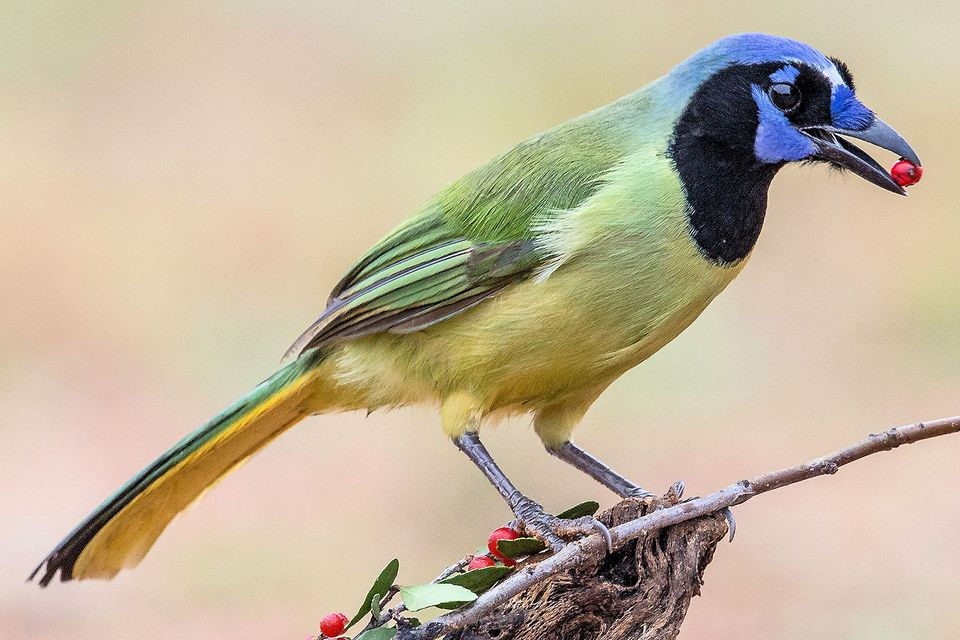 25 Best Birds To See In Texas
