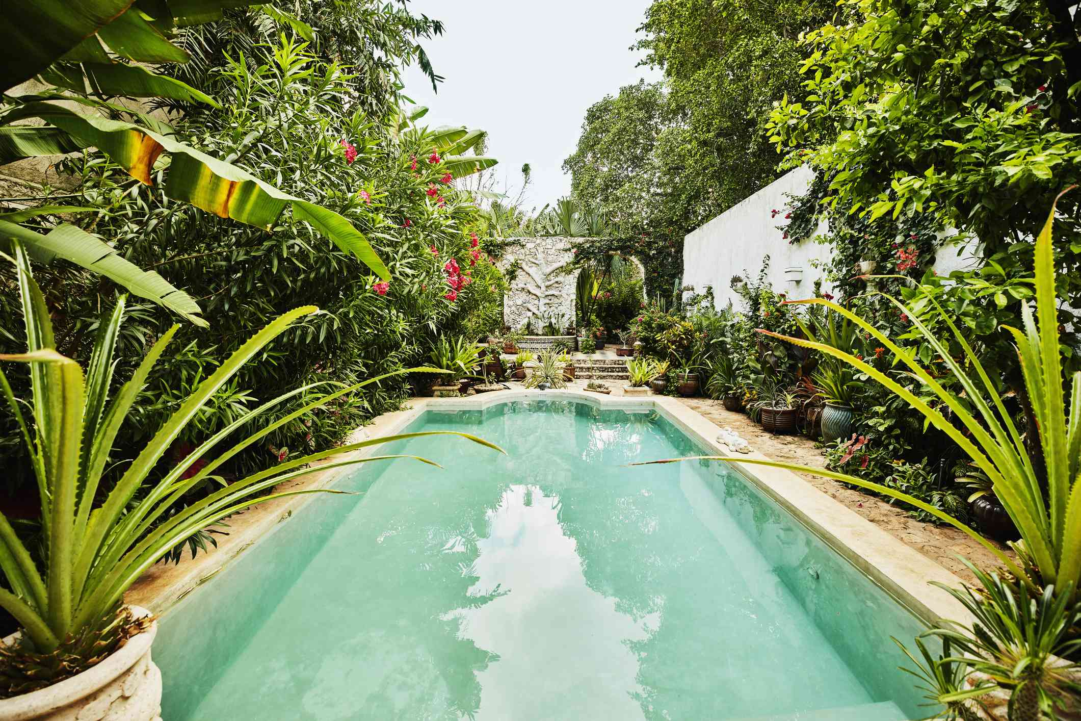 A variety of potted plants surrounding a swimming pool.