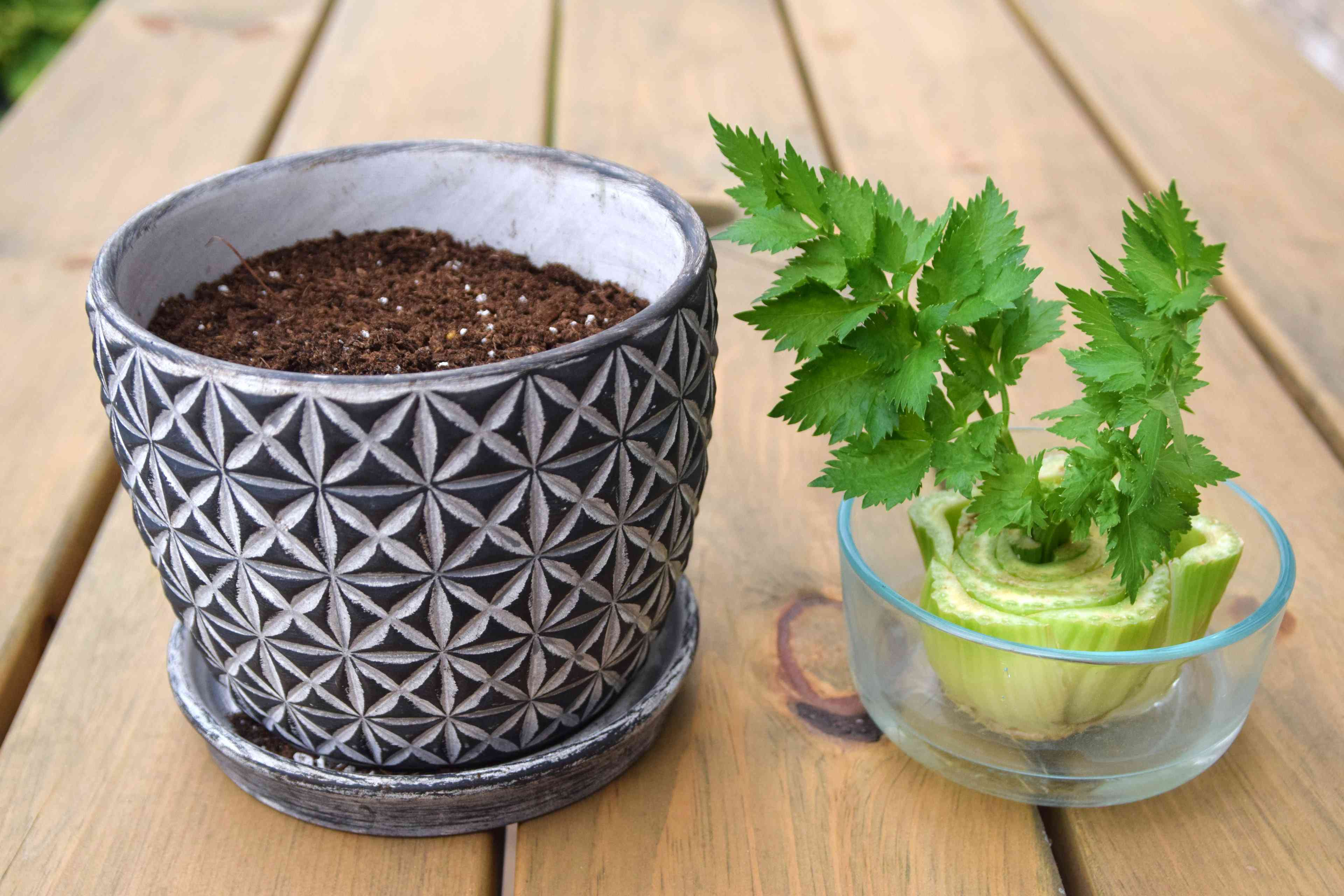 placing the celery into a pot