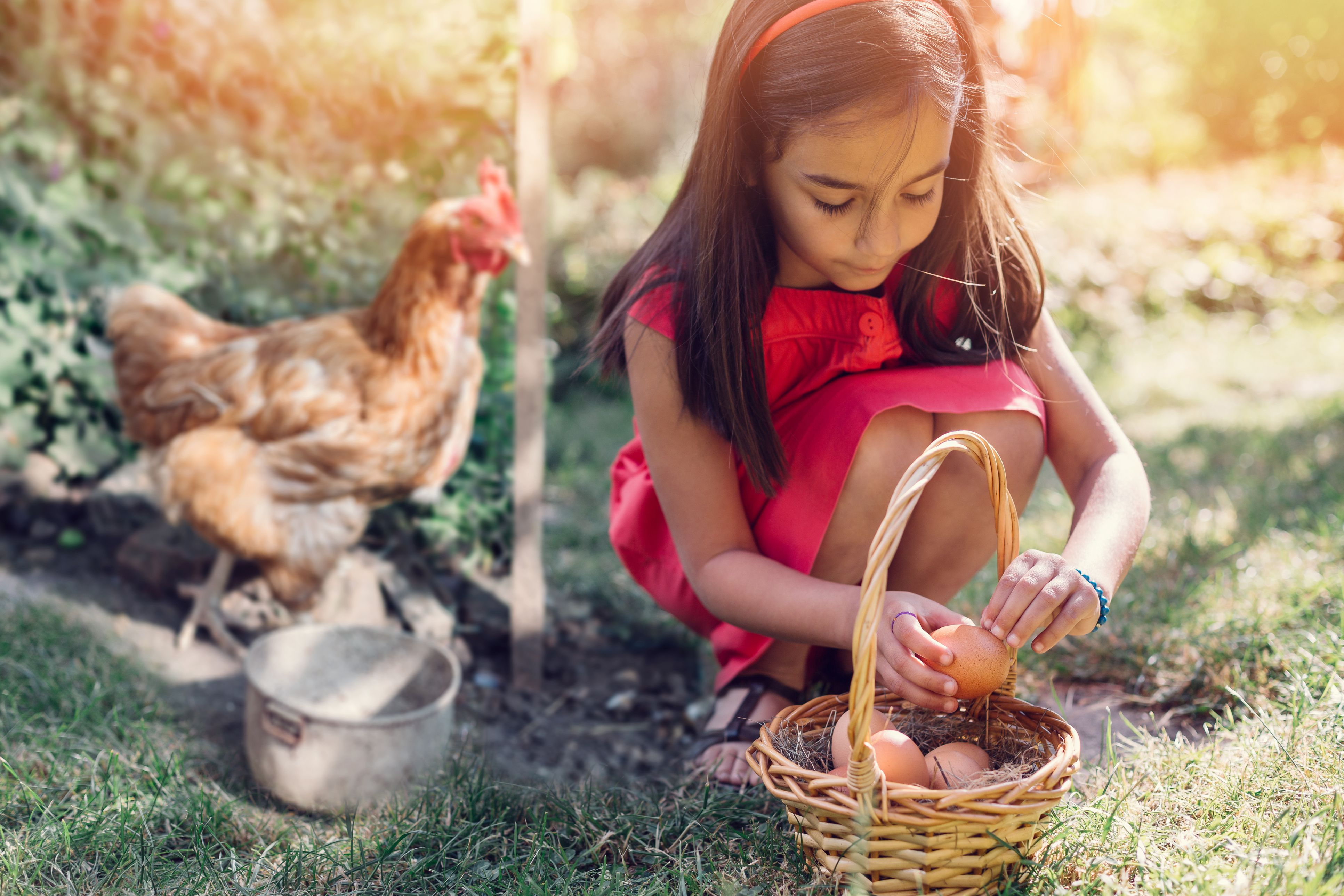 13 Free Chicken Coop Plans You Can Diy This Weekend Diagram Chickens Roosters Pinterest