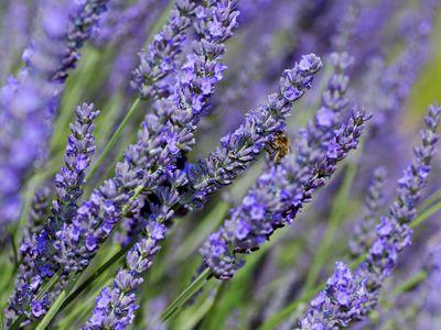 5 Herbs Great for Sleep Pillows