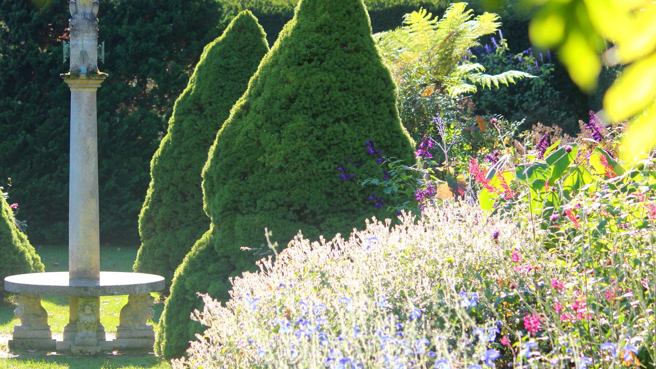 How To Grow Dwarf Alberta Spruce In A Pot