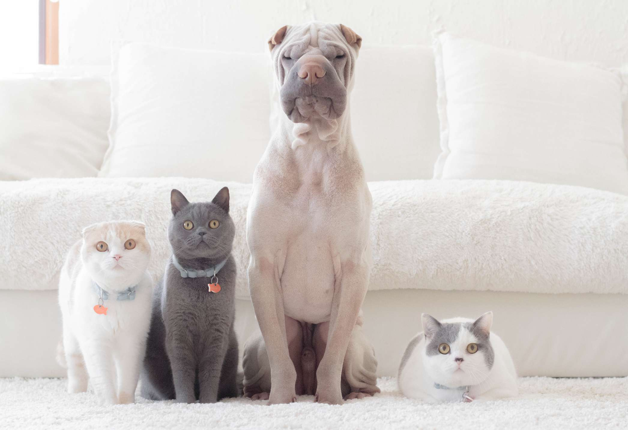 Pet cats and dog