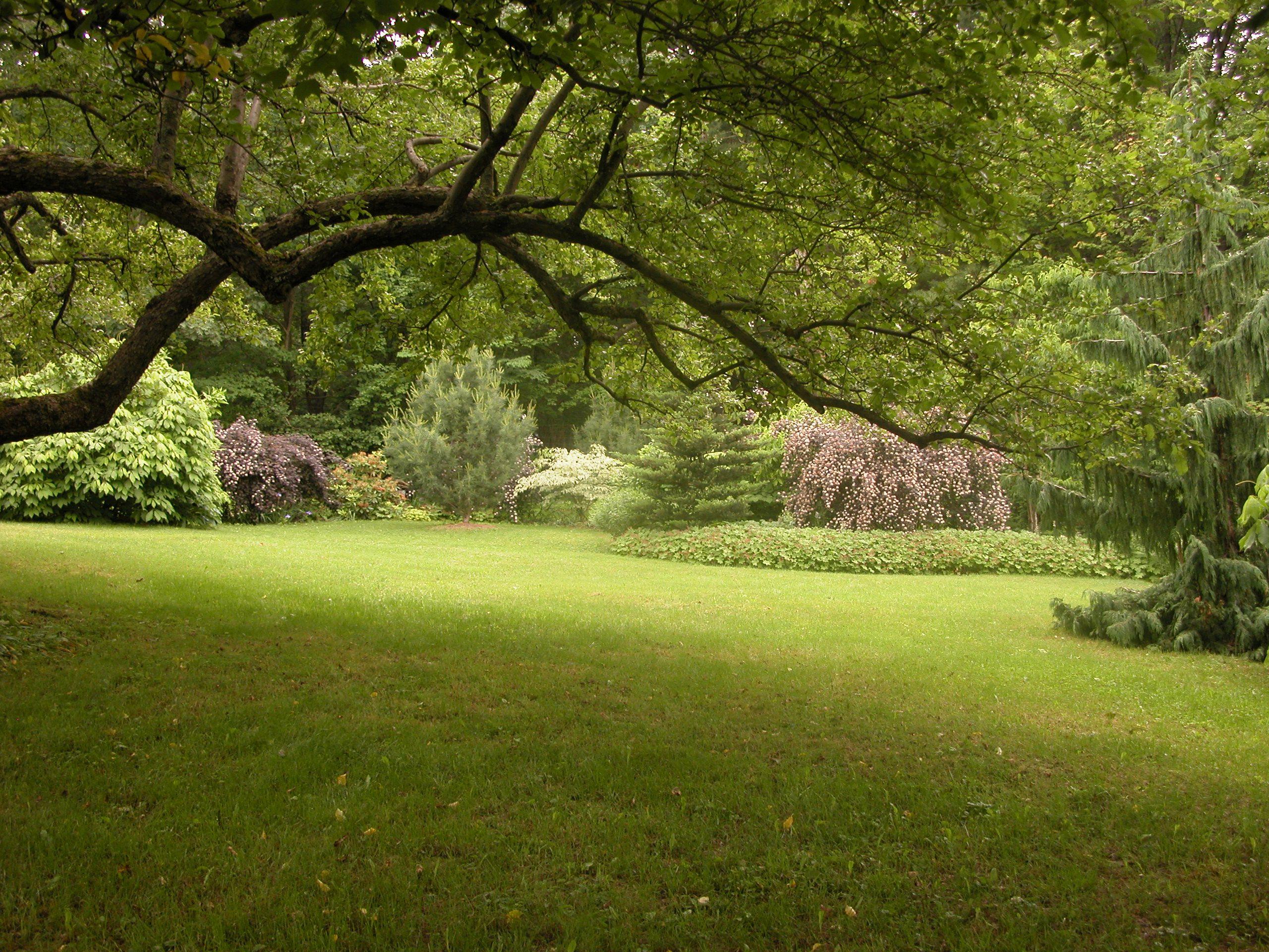 Garden with shrubs