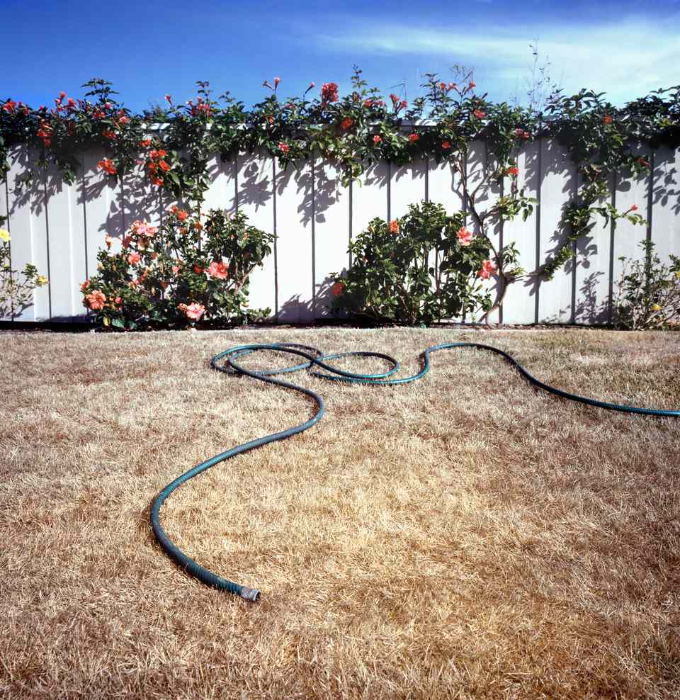 A dry, drought-stricken lawn