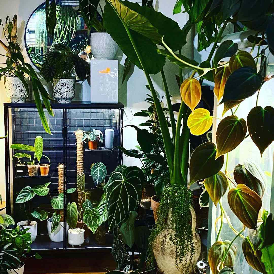 Indoor jungle and greenhouse cabinet