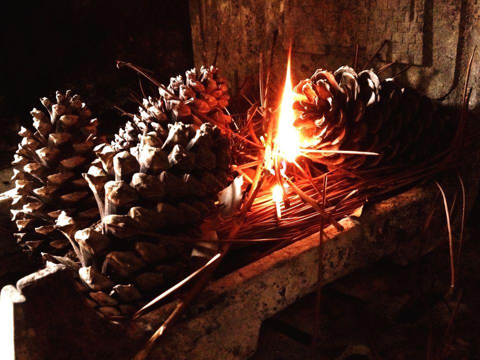 borax pine cones