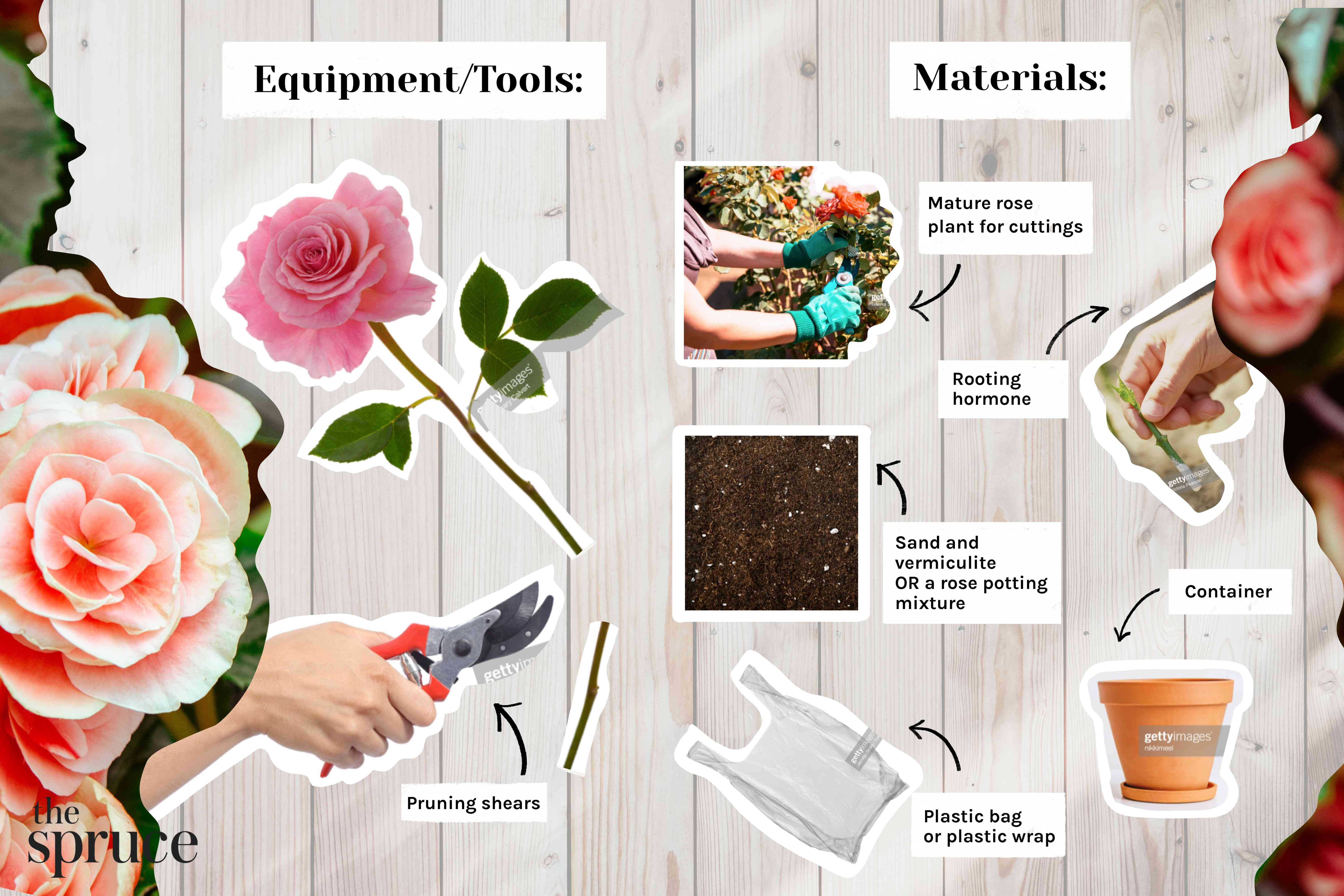 Materials and tools photo composite to grow roses from cuttings