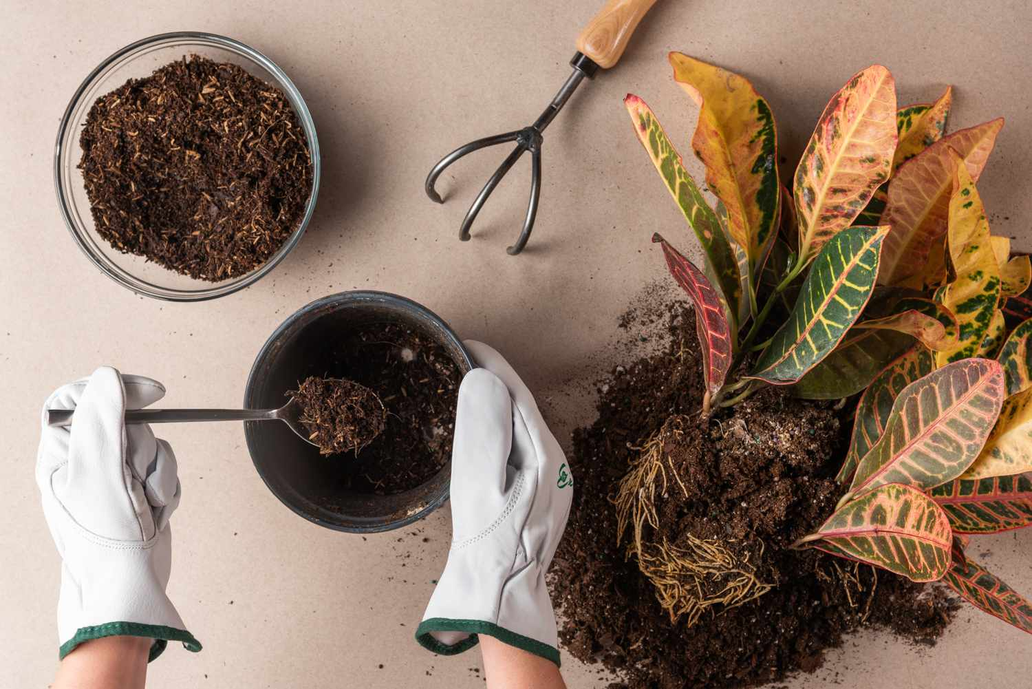 caring for a rootbound plant step 4