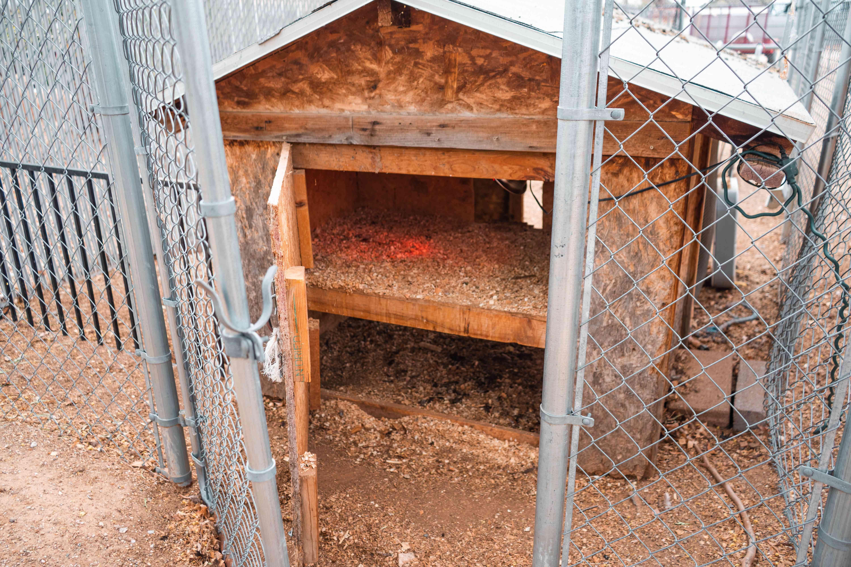 Fenced gate and chicken coop door opened revealing two solid floors inside coop
