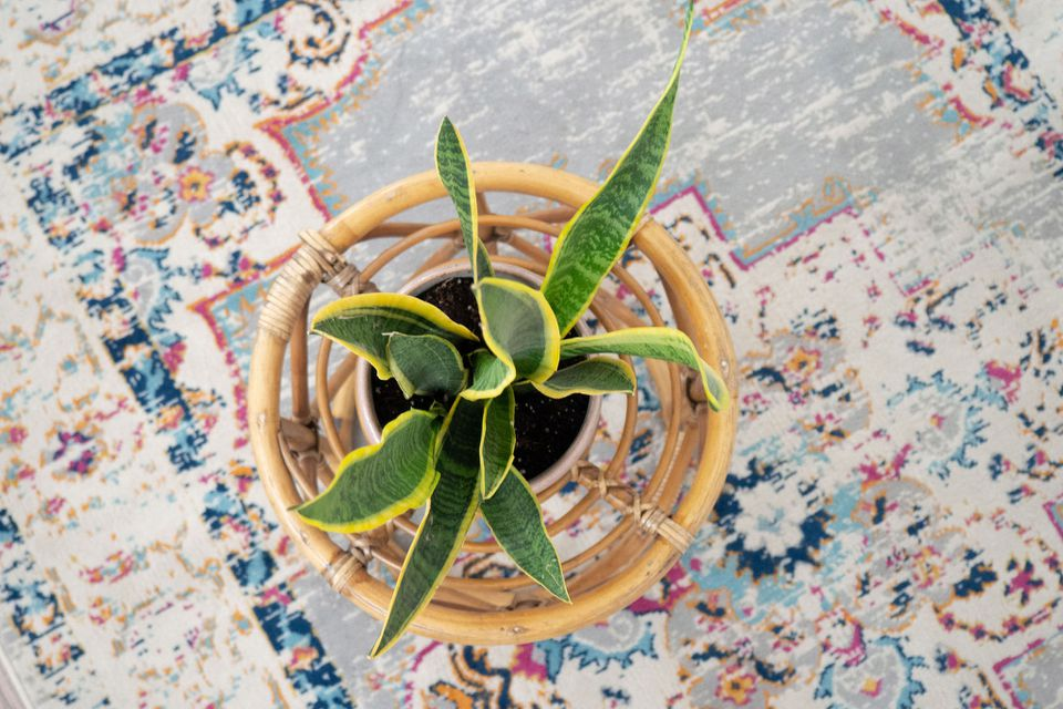 a snake plant on a side table