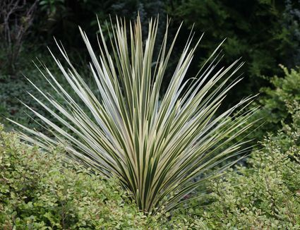 10 Great Ornamental Grasses To Grow In Containers
